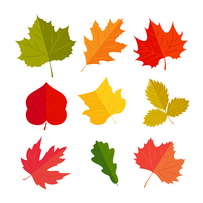 Vector Illustration Autunm Leafs In The Set Stock Illustration - Download Image Now