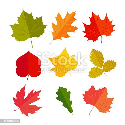 Vector Illustration Autunm Leafs In The Set Stock Vector Art & More Images of Abstract 965396500