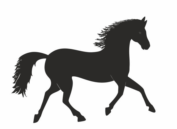 vector illustration, beautiful classic horse in silhouette black and white, trot, trotting, running. - clip art of a black and white barn stock illustrations, clip art, cartoons, & icons