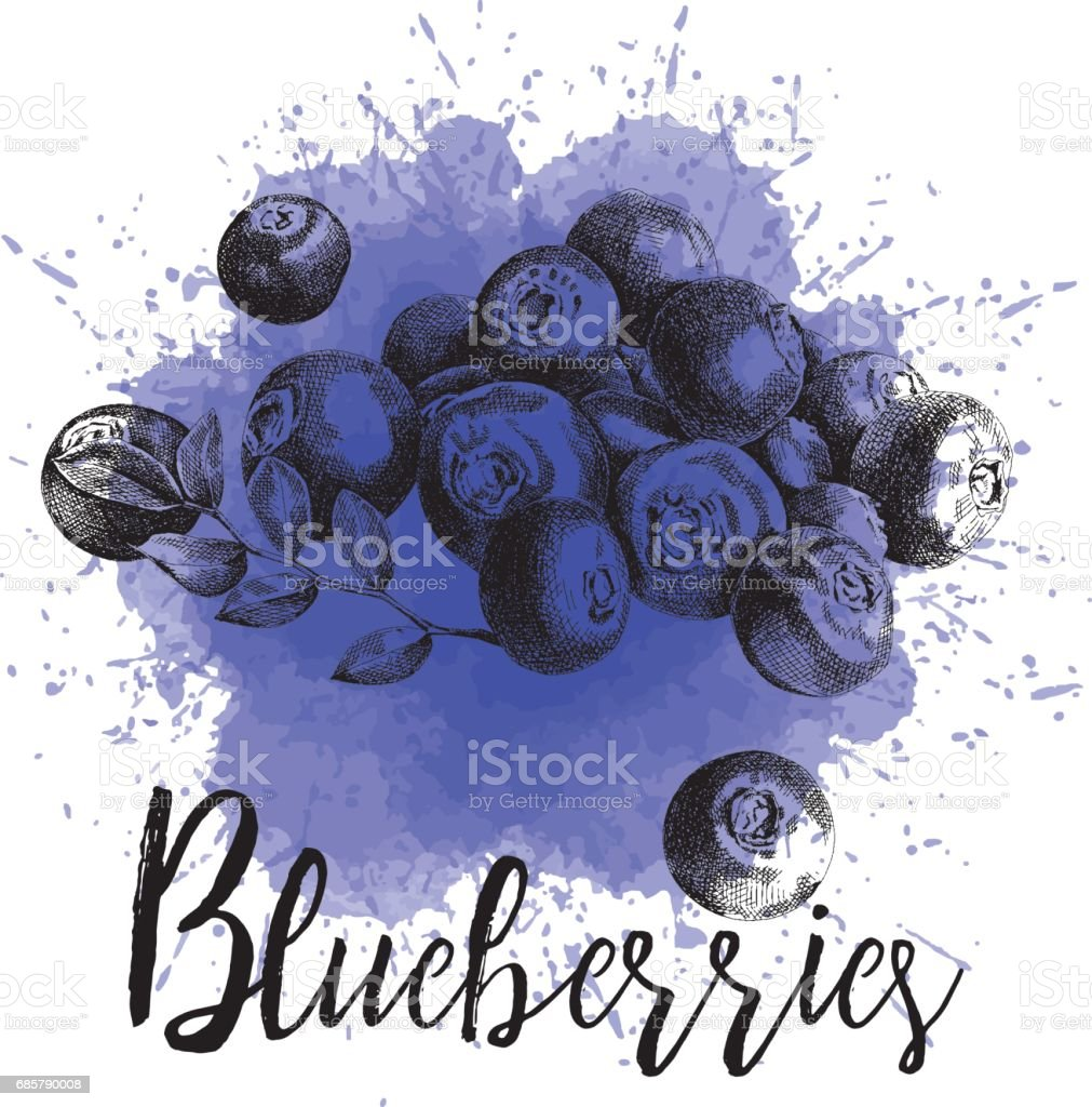 Vector illustration blueberries in hand-drawn graphics vector art illustration
