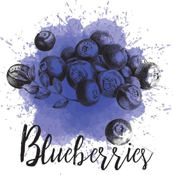 Vector illustration blueberries in hand-drawn graphics vector art illustration