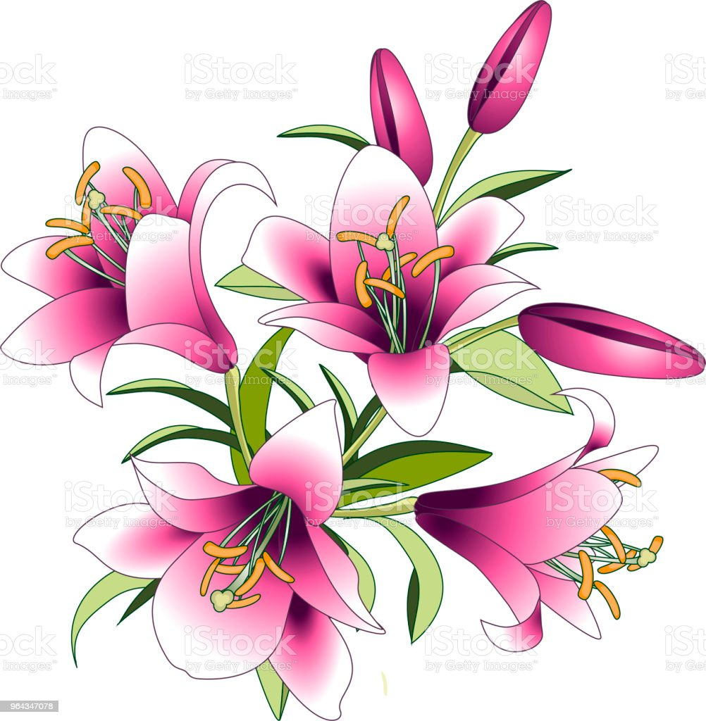 Vector illustration bouquet of pink lily flowers stock vector art vector illustration bouquet of pink lily flowers royalty free vector illustration bouquet of izmirmasajfo