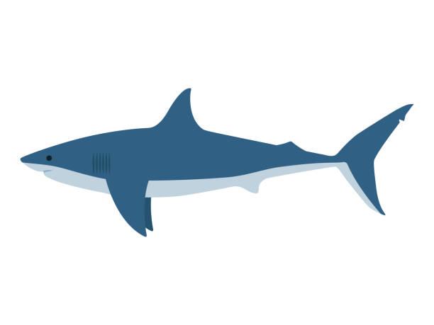 29 Cartoon Shark Side View Illustrations Royalty Free Vector Graphics Clip Art Istock