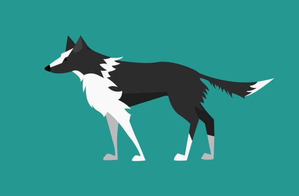 vektor-illustration: hund - black and white border collie. flaches design. - arbeitshunde stock-grafiken, -clipart, -cartoons und -symbole