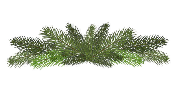 Royalty Free Christmas Greenery Clip Art, Vector Images ...