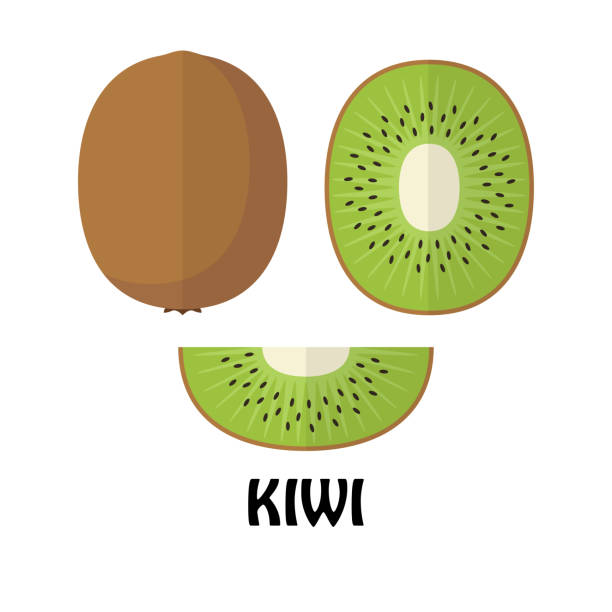ilustrações de stock, clip art, desenhos animados e ícones de vector illustration flat kiwi isolated on white background , minimal style , raw materials fresh fruit - kiwi