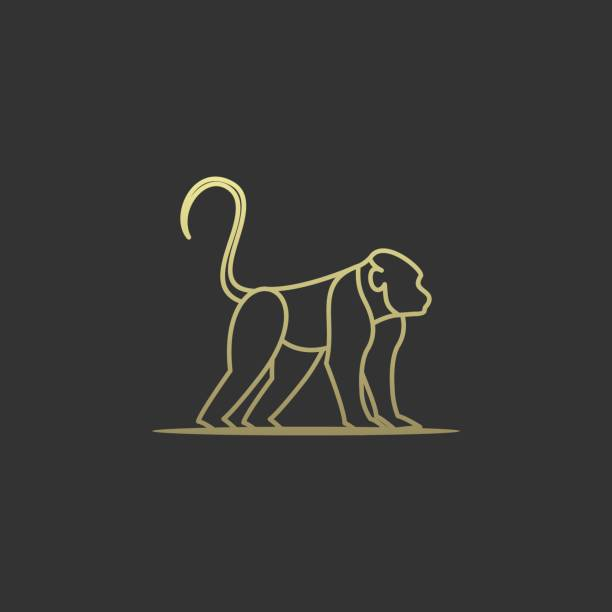 Vector Illustration Forest Monkey Line Art. Vector Illustration Forest Monkey Line Art. marmoset stock illustrations