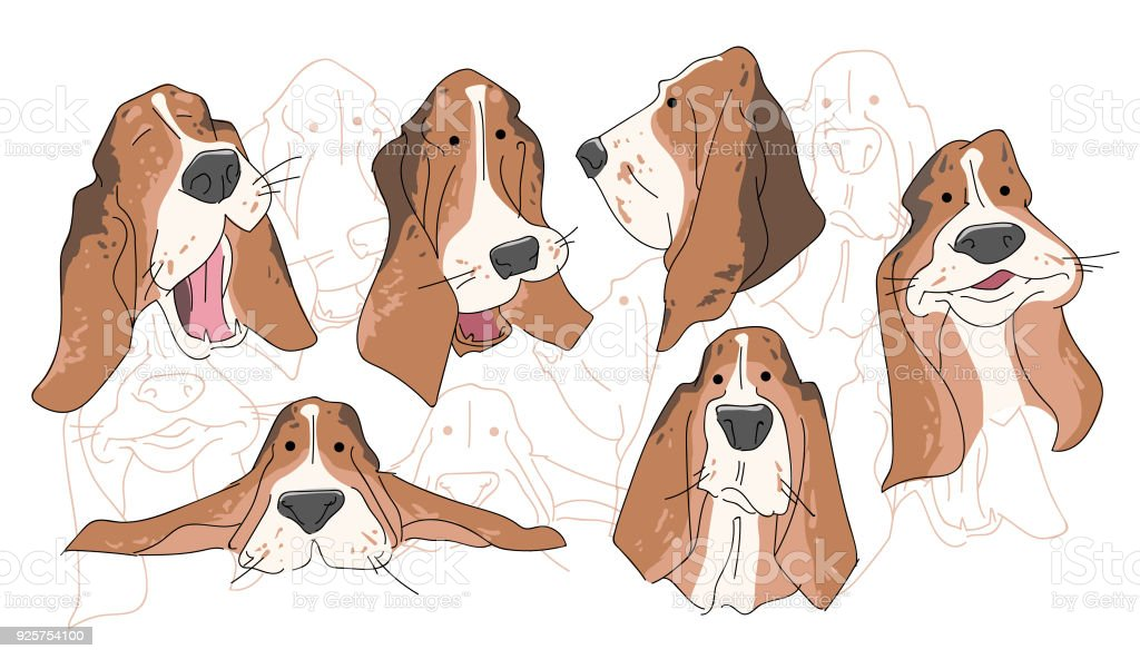 royalty free basset hound clip art vector images illustrations rh istockphoto com basset hound clipart black and white basset hound clipart black and white