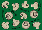 Vector illustration garlic on a green background and calligraphic inscription «Garlic»