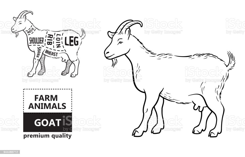 Diagrams Of A Girl Goats Example Electrical Wiring Diagram
