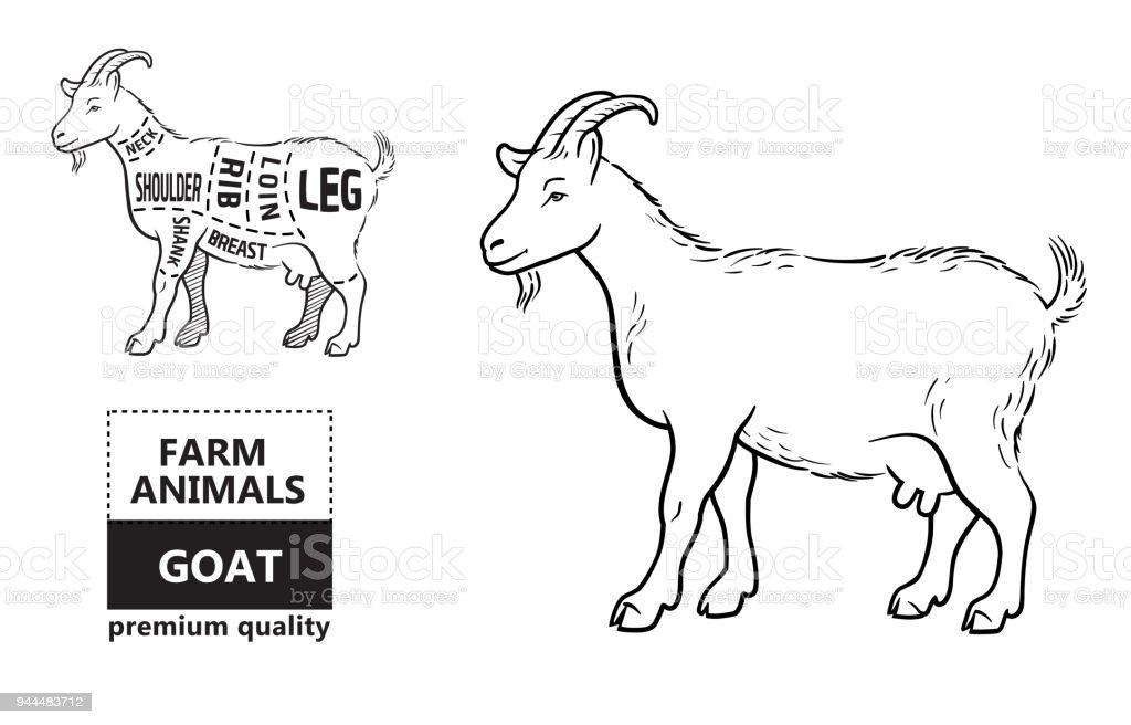 vector illustration goat cuts diagram or chart goat black