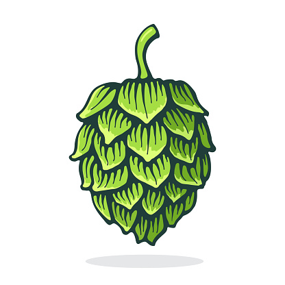 Vector illustration. Green cone of hop. Symbol of beer, pub and alcoholic beverage. Graphic design with contour