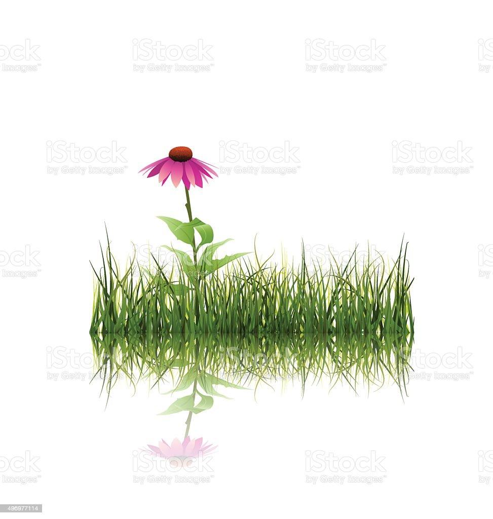 Vector illustration Green grass and echinacea flower vector art illustration
