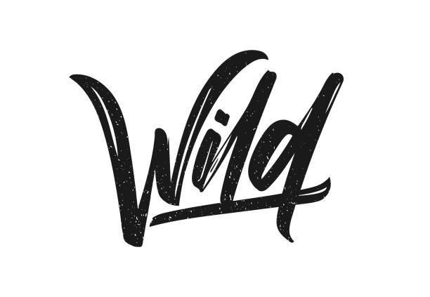 Ilustração do vetor: mão lettering caligráfico de escova desenhada tipo de selvagem em fundo branco. - ilustração de arte em vetor
