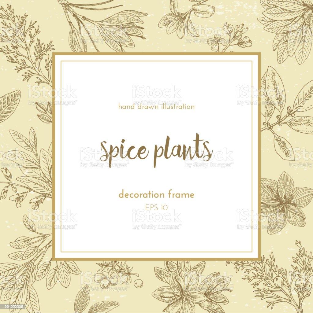 Vector illustration hand drawn illustration in retro style. spice plants. decorative frame for decoration - Royalty-free Alternative Medicine stock vector