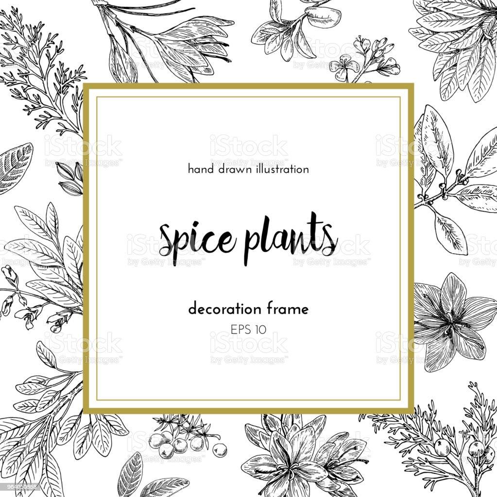 ベクトル図は手レトロなスタイルで描かれたイラストです。スパイスの植物。装飾のための装飾的なフレーム - アザミのロイヤリティフリーベクトルアート
