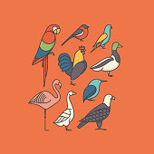 Vector illustration icon set of bird: macaw, bullfinch, parrot, rooster, duck, flamingo, goose, kingfisher, eagle