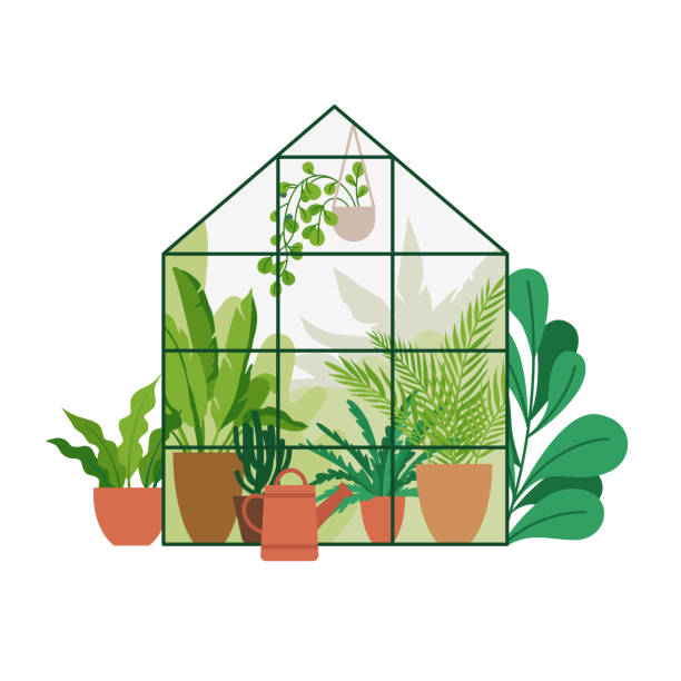 Vector illustration in flat simple style - greenhouse with plants, stylish urban jungle poster or print for home gardening vector art illustration