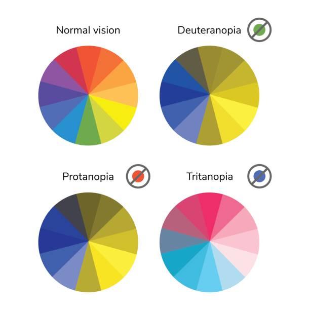 vektor-illustration, infografik, farbrad, palette, normal - farbwahrnehmung stock-grafiken, -clipart, -cartoons und -symbole