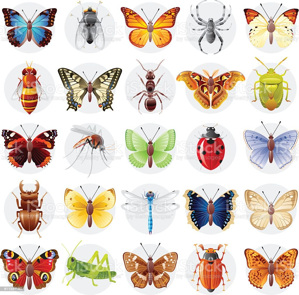 Vector illustration, insect animal icon set. Butterfly, spider, bee, ladybug