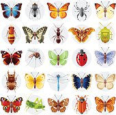 Vector illustration of insect icon set. Flying animals - peacock butterfly, spider, bee, Swallowtail, ant, atlas moth, bug, admiral, mosquito, ladybug, stag beetle, dragonfly, grasshopper, beetle.