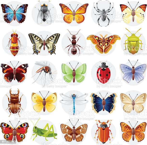 Vector illustration insect animal icon set butterfly spider bee vector id611331160?b=1&k=6&m=611331160&s=612x612&h=5y3orpbxuresvq01kpteous 3tyxrcy wxqvqzr8ssq=