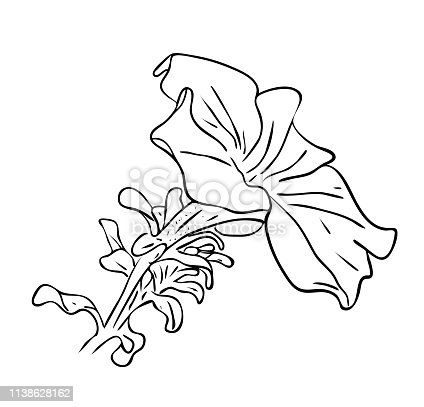 Free Hawaiian Flower, Download Free Clip Art, Free Clip Art on Clipart  Library