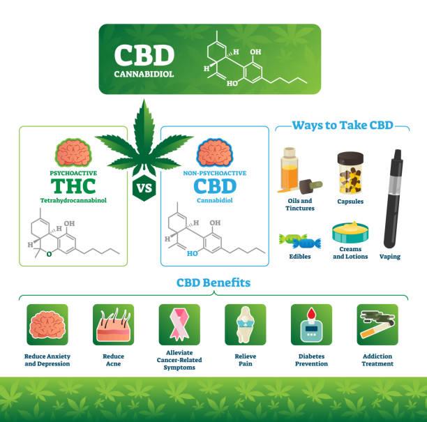 CBD vector illustration. Labeled medical THC cannabis benefits infographics - illustrazione arte vettoriale