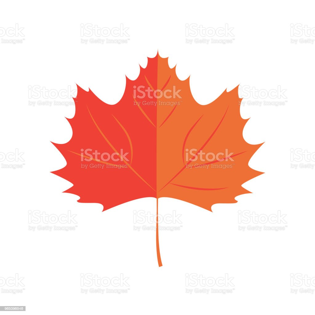 Vector Illustration. Maple leaf. Autumn leaf icon vector illustration maple leaf autumn leaf icon - stockowe grafiki wektorowe i więcej obrazów abstrakcja royalty-free