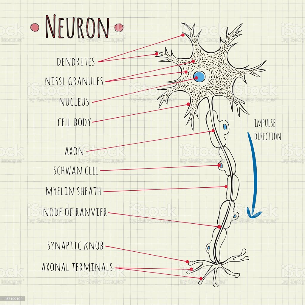 vector illustration neuron chart vector art illustration