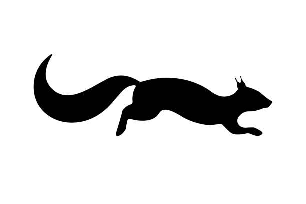 illustrations, cliparts, dessins animés et icônes de illustration vectorielle d'une silhouette noire d'un écureuil. fond blanc isolé. icône de la vue de côté d'écureuil, profil. - écureui