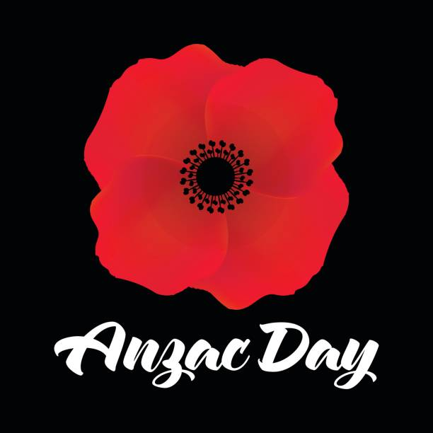 Vector Illustration Of A Bright Poppy Flower Anzac Day Symbol Stock