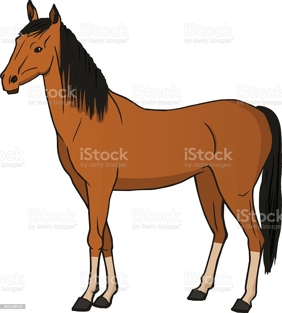 Vector illustration of a brown horse vector art illustration