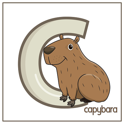Vector illustration of a Capybara smiling face isolated on white background. With the capital letter C for use as teaching materials Let children get to know the English alphabet.