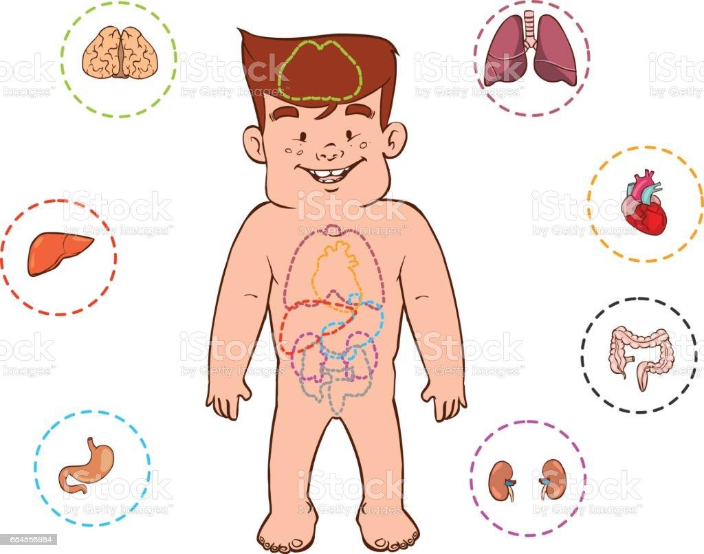 Ilustración de Ilustración De Vector De Aparato Digestivo Para Niños ...