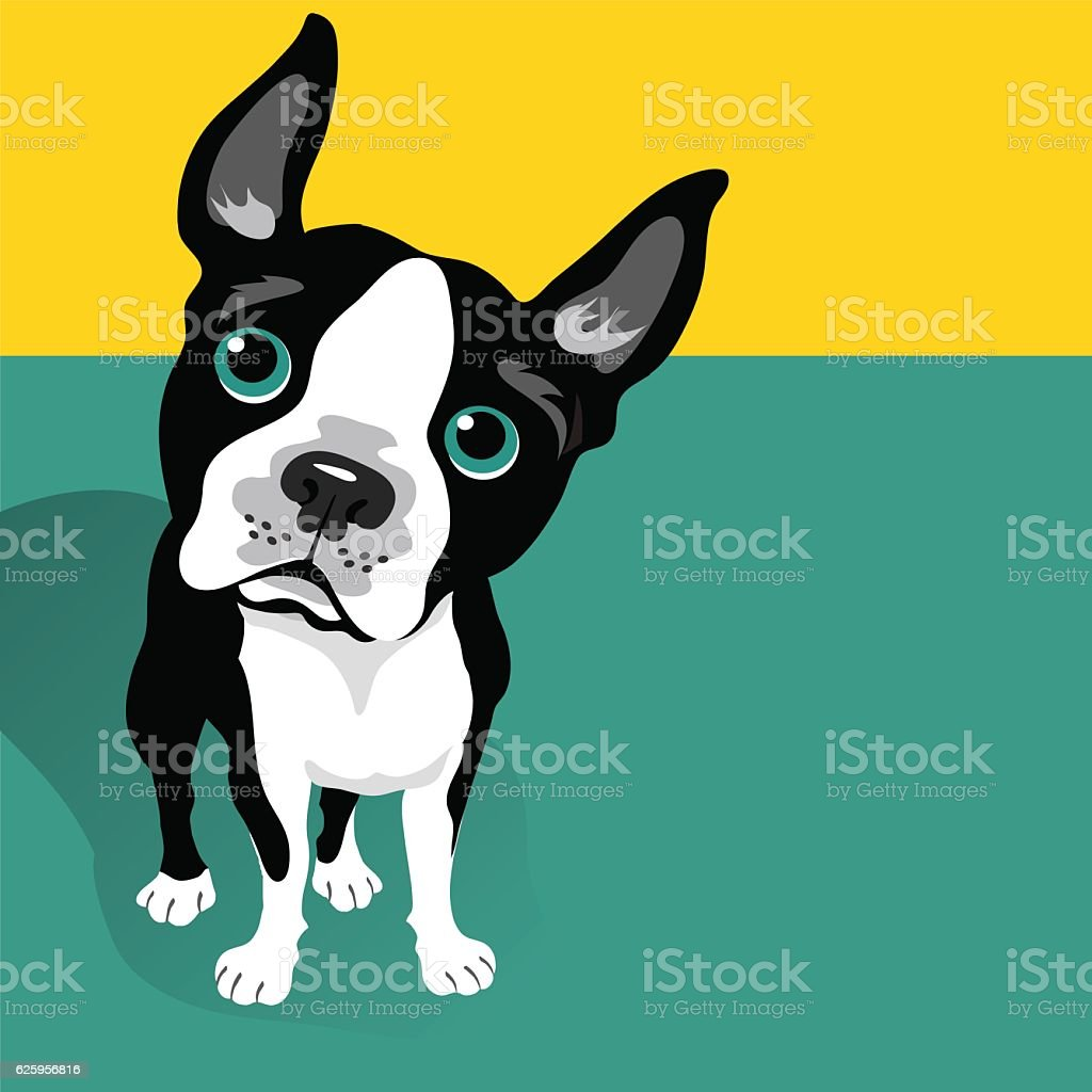 vector illustration of a cute Boston Terrier Dog vector art illustration