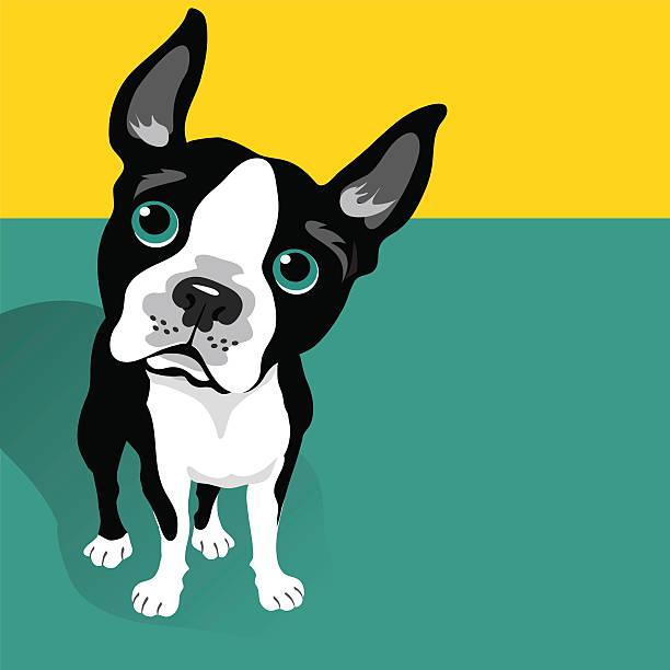 vector illustration of a cute Boston Terrier Dog vector art illustration