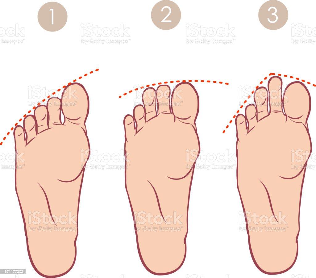 vector illustration of a form of toes vector art illustration