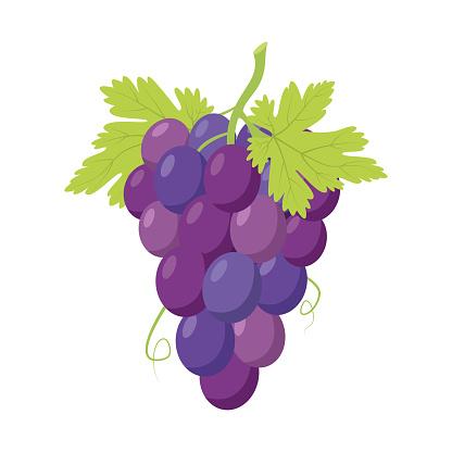 Vector Illustratie Van Een Grappig Bos Van Paarse Druiven In Cartoon Stijl Stockvectorkunst En Meer Beelden Van Bontgekleurd Istock