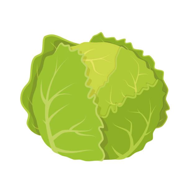 lettuce vector art & graphics   freevector.com  free vector