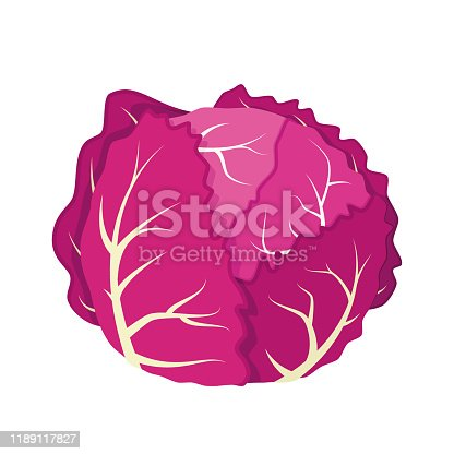 Vector illustration of a funny purple cabbage in cartoon style.