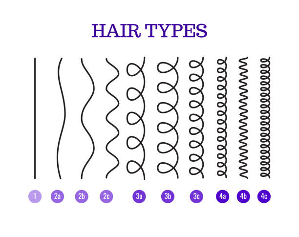 vector illustration of a hair types chart displaying all types and labeled. - kręcone włosy stock illustrations