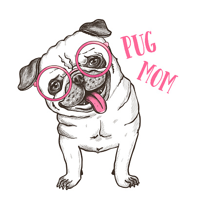 Vector illustration of a hand drawn happy fashionable pug. T shirt print design.