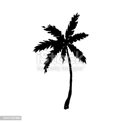 Vector illustration of a hand drawn palm tree isolated on white.