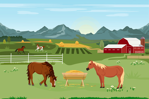 Vector illustration of a horse farm and agriculture. Horse breeding. Summer rural landscape with a farm and horses eating grass. Design elements for infographics, websites and print media