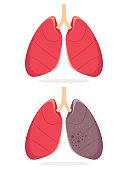 vector illustration of a lung