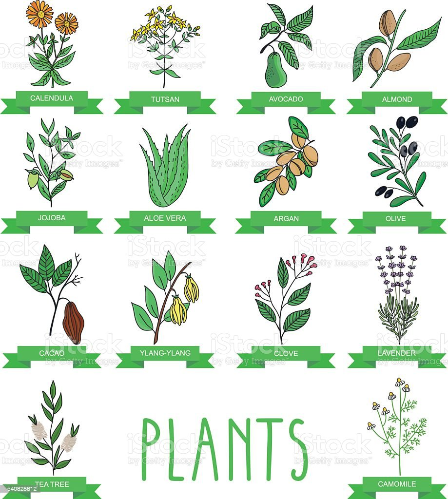 Vector illustration of a plant vector art illustration