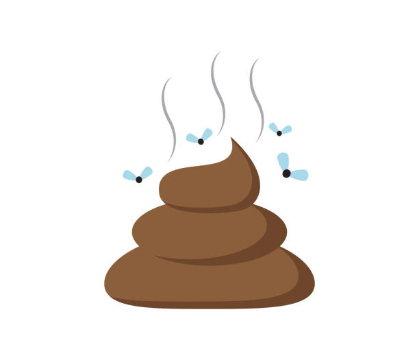 Vector illustration of a shit icon or poop icon isolated on white background Vector illustration of a shit icon or poop icon isolated on white background feces stock illustrations