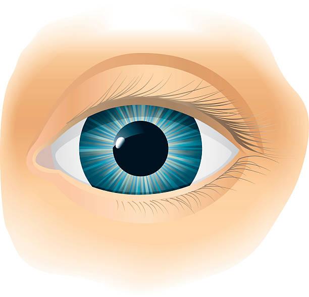 ilustraciones, imágenes clip art, dibujos animados e iconos de stock de ojo - ojos azules
