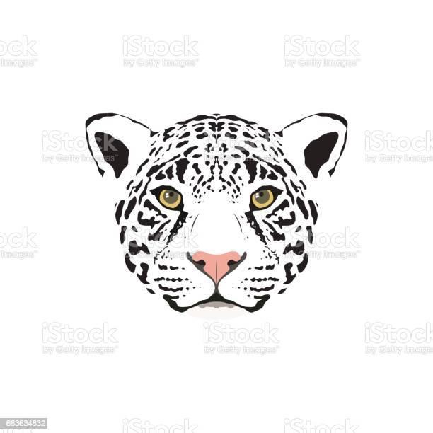 Vector illustration of a white jaguar head suitable as tattoo team vector id663634832?b=1&k=6&m=663634832&s=612x612&h=er8z3vp0cegmuaxjvwpcd4kdrrjdgegffoxzpxh5dec=